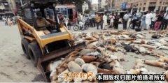 上千只狗狗躺在马路上奄