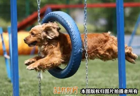 狗狗训练学校