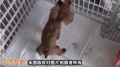 怎么训狗狗大小便图2