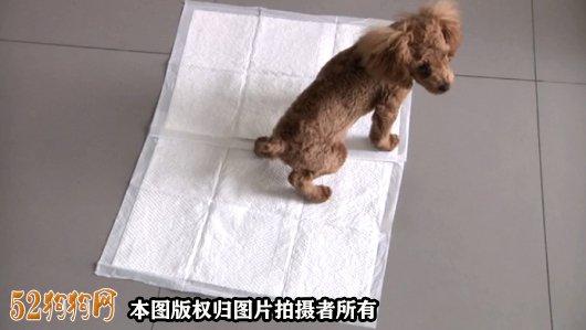 怎么训狗狗大小便图