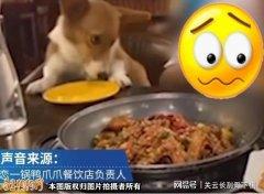 云南一餐厅女子默许宠物