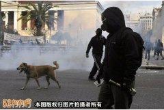 希腊一宠物狗被警察射杀
