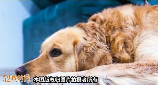 狗狗吐怎么办?了解原因对症治疗!