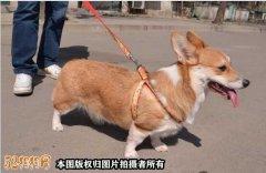 """""""愚爱""""!上海男子偷狗"""