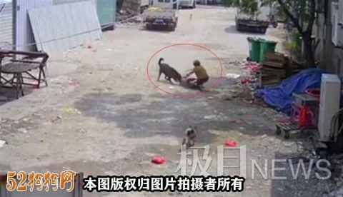 福建一老人街上被狗撕咬身亡!饲养猛犬需谨慎!