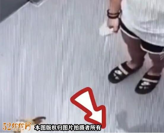 为什么沈阳一女子宠物狗在电梯里方便拖干净被点赞!