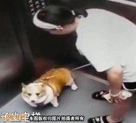 为什么沈阳一女子宠物狗