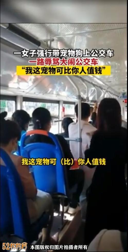 山西一60岁大妈带宠物狗坐公交还辱骂司机!