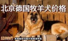 北京德国牧羊犬价格?