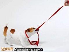 北京一宠物狗未拴绳导致